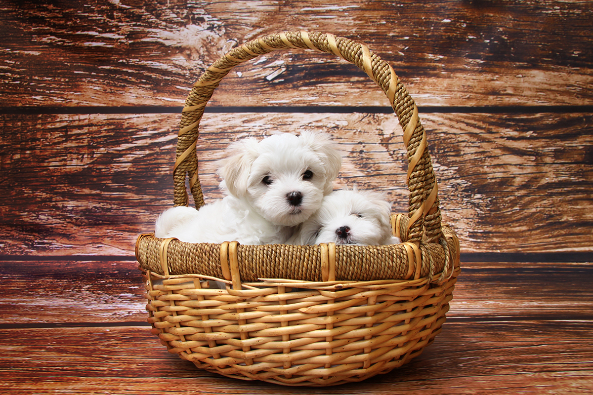 Google ads keyword planner puppies in basket