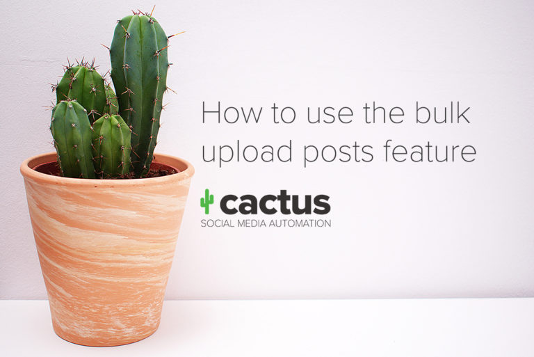 How to bulk upload posts in Cactus Social Media Automation
